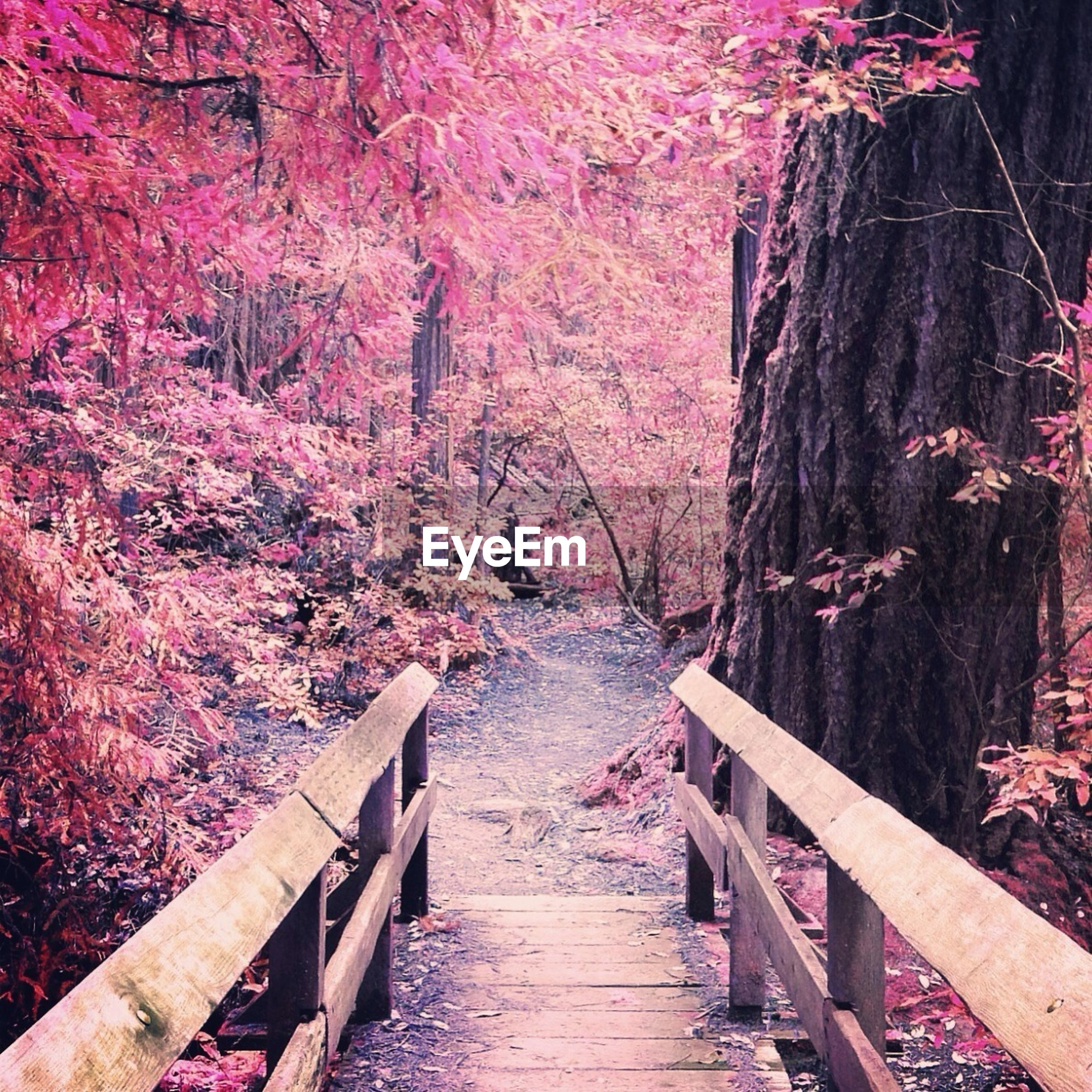 tree, wood - material, tranquility, beauty in nature, the way forward, nature, tranquil scene, railing, forest, scenics, boardwalk, water, footbridge, wooden, wood, branch, growth, red, outdoors, day