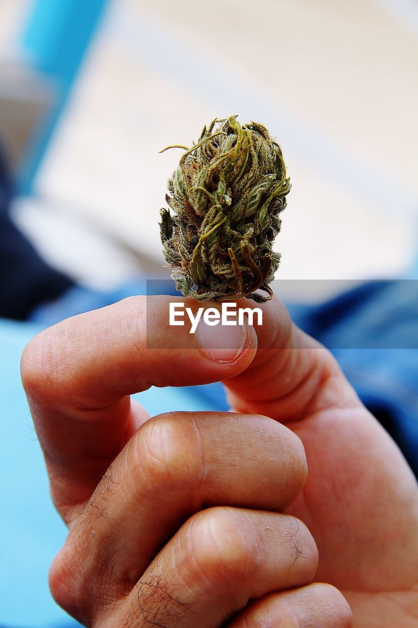 human hand, human finger, human body part, one person, real people, holding, marijuana - herbal cannabis, focus on foreground, men, cannabis plant, close-up, addiction, outdoors, day, nature, sky, adult, people