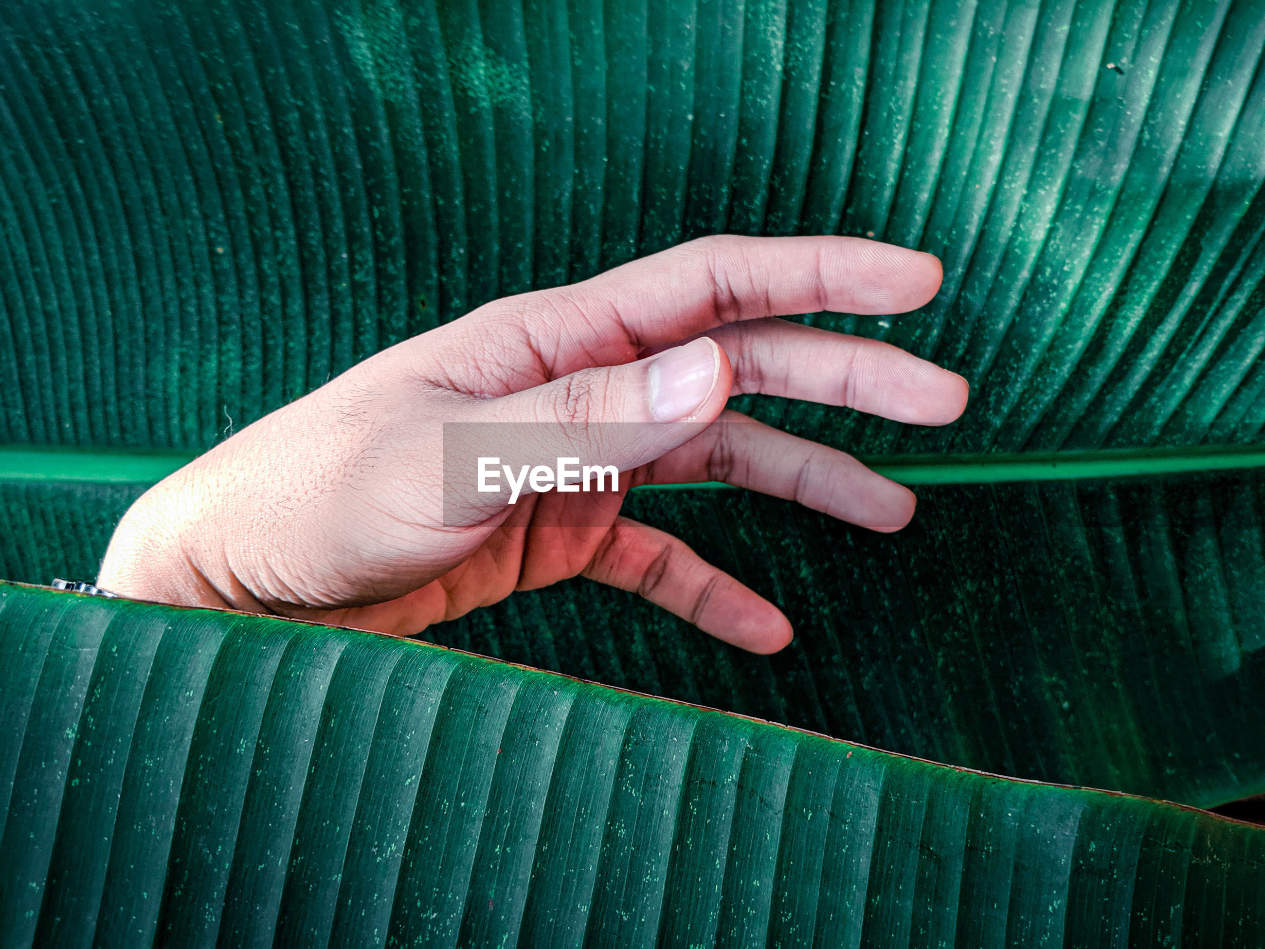 Close-up of hand behind leaf