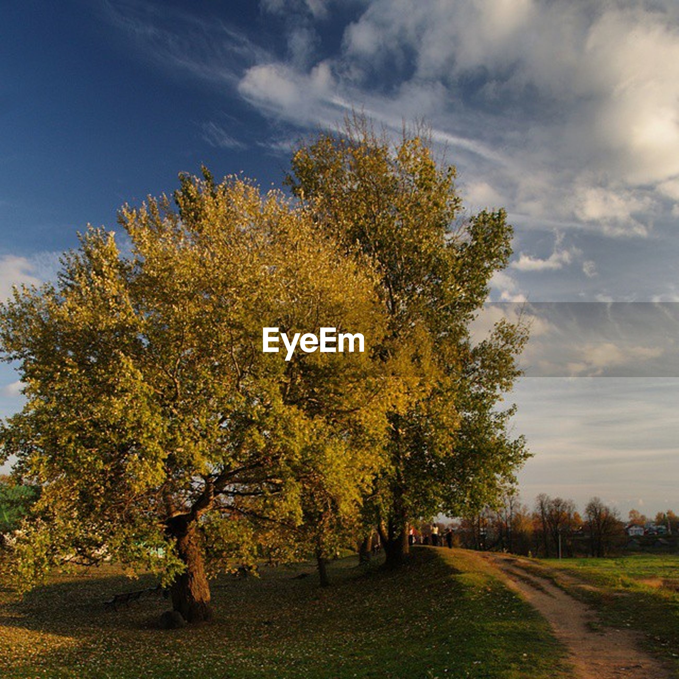 tree, sky, the way forward, cloud - sky, tranquility, road, tranquil scene, nature, growth, beauty in nature, cloud, scenics, field, landscape, diminishing perspective, cloudy, autumn, sunlight, outdoors, day