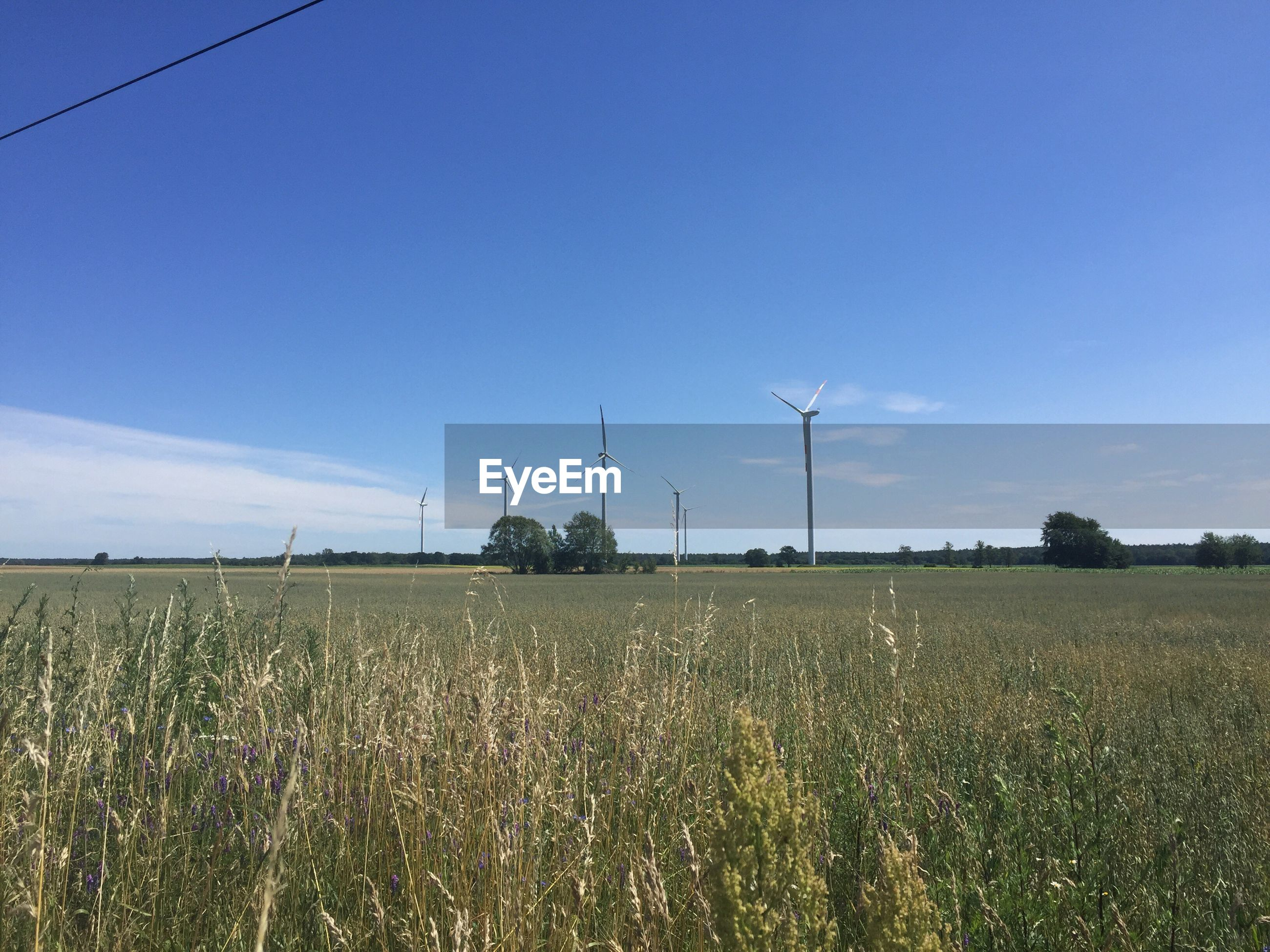 VIEW OF FIELD AGAINST SKY