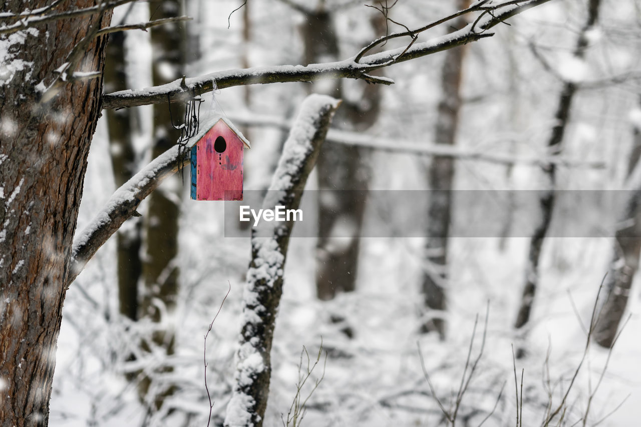 tree, winter, snow, cold temperature, focus on foreground, hanging, day, no people, nature, plant, bare tree, branch, outdoors, love, emotion, red, heart shape, positive emotion, close-up, snowing