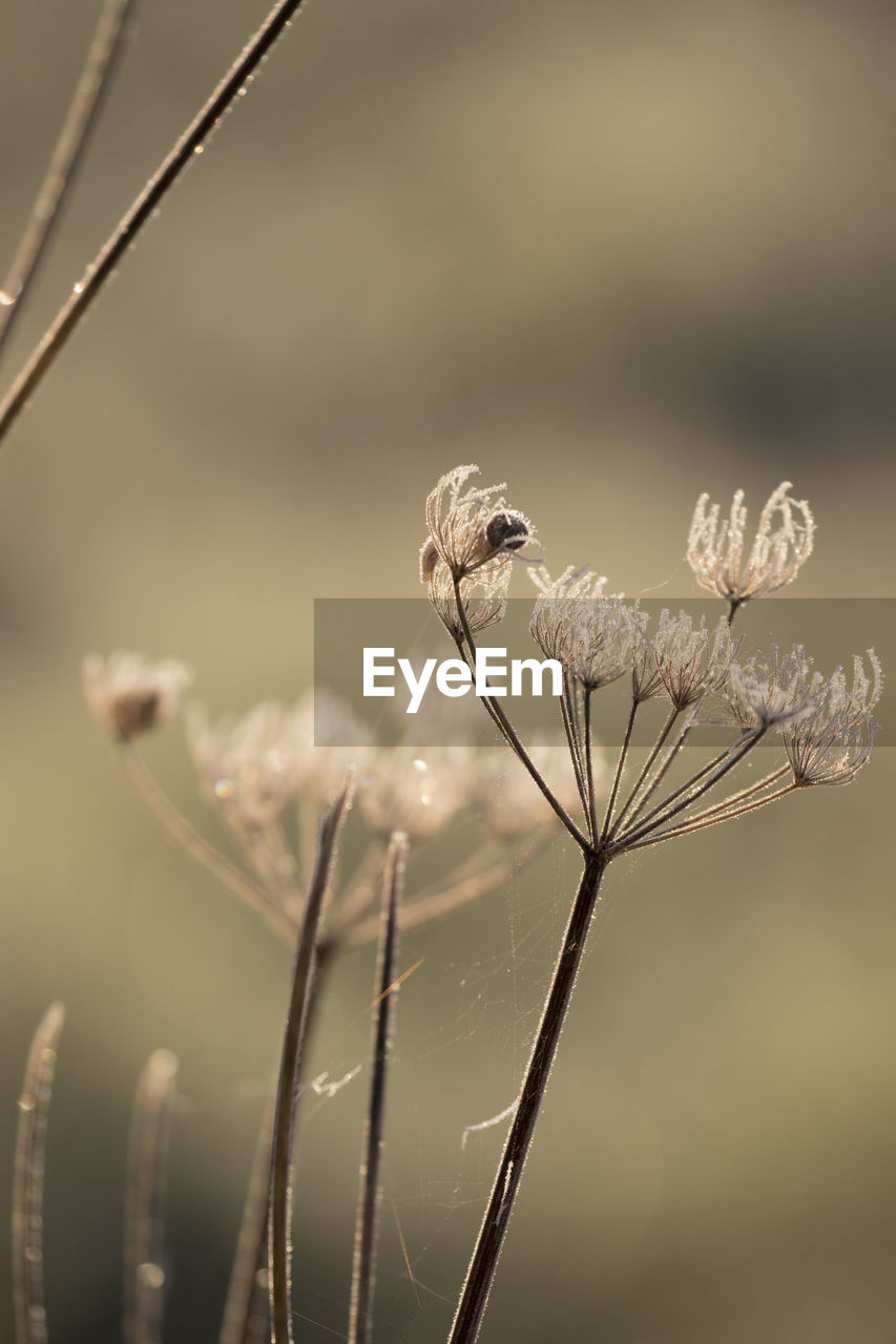 plant, growth, focus on foreground, beauty in nature, close-up, flower, nature, flowering plant, fragility, vulnerability, day, plant stem, no people, freshness, selective focus, field, dry, tranquility, land, outdoors, wilted plant, dead plant