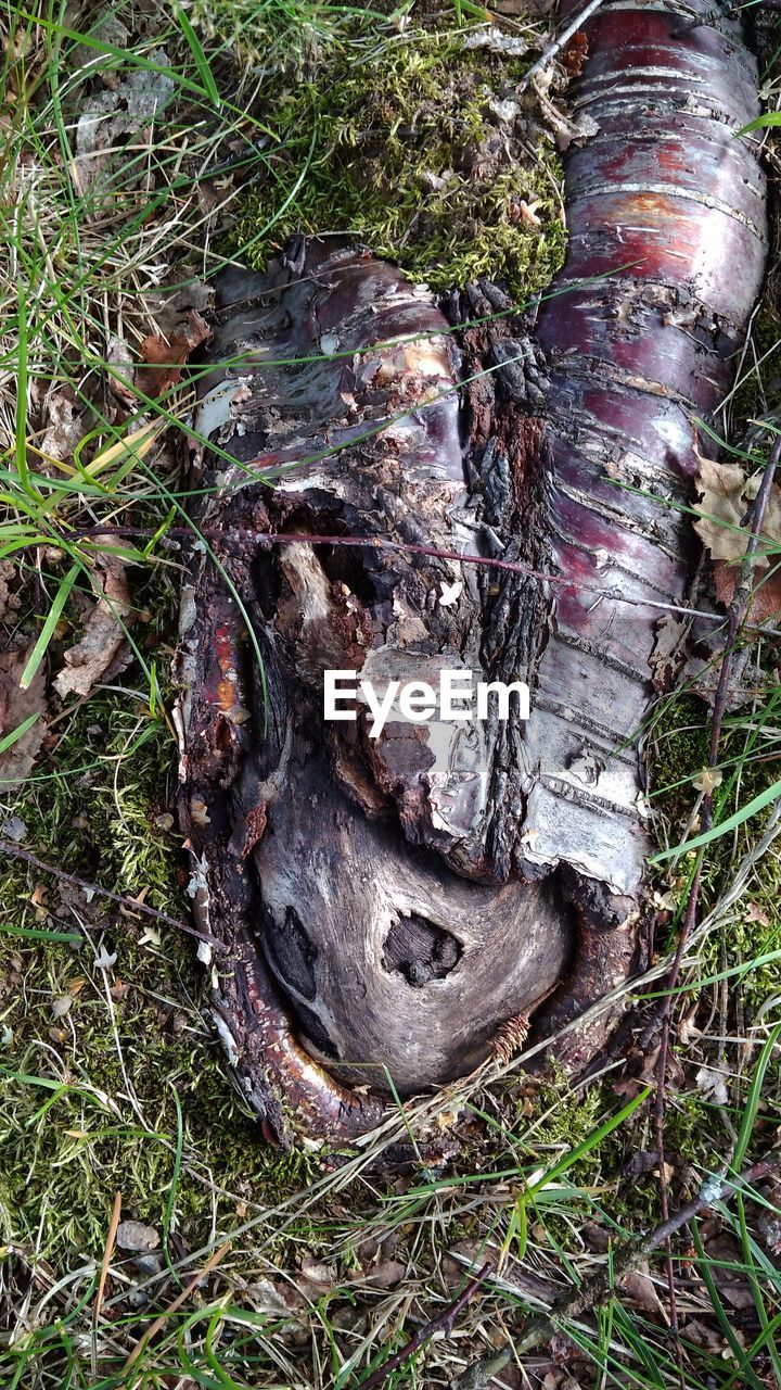 plant, tree, land, nature, day, growth, no people, field, high angle view, close-up, tree trunk, grass, outdoors, trunk, forest, bark, metal, wood, moss, textured