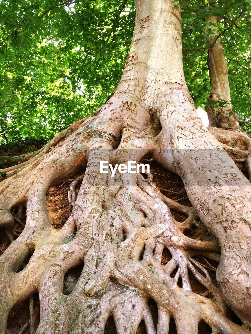 tree, plant, tree trunk, trunk, growth, nature, day, no people, root, low angle view, plant part, art and craft, land, forest, branch, outdoors, sculpture, creativity, park, tranquility