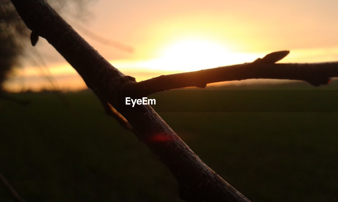 sunset, nature, tree, sun, outdoors, beauty in nature, sunlight, no people, close-up, scenics, branch, sky, day