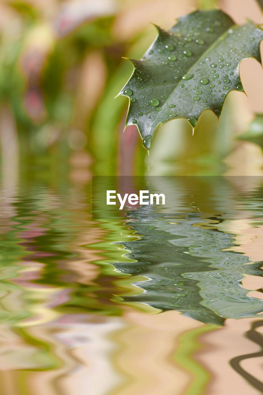 Reflection of wet leaf on lake during rainy season