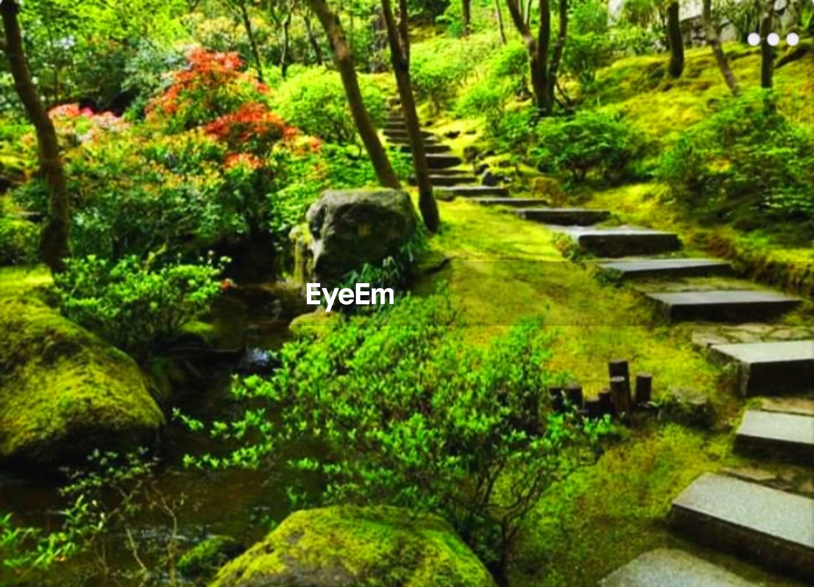 plant, tree, green color, tranquility, growth, nature, no people, beauty in nature, formal garden, tranquil scene, japanese garden, garden, forest, day, foliage, lush foliage, outdoors, scenics - nature, landscaped, ornamental garden, garden path, hedge