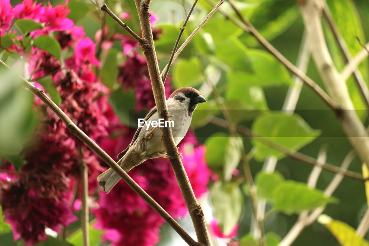 one animal, bird, vertebrate, animal wildlife, animals in the wild, animal, animal themes, perching, plant, focus on foreground, day, no people, nature, beauty in nature, close-up, growth, tree, outdoors, songbird, selective focus