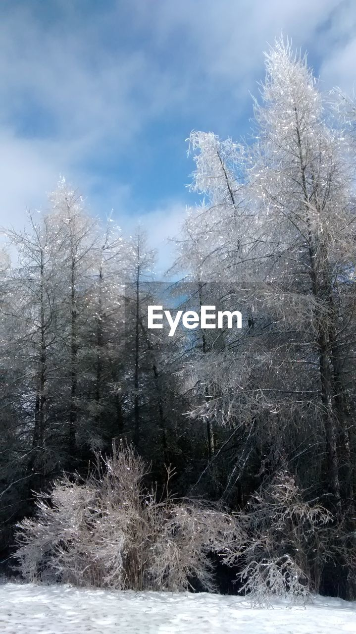 tree, winter, cold temperature, nature, snow, no people, day, beauty in nature, sky, outdoors, bare tree, branch, tranquility, low angle view, growth, freshness