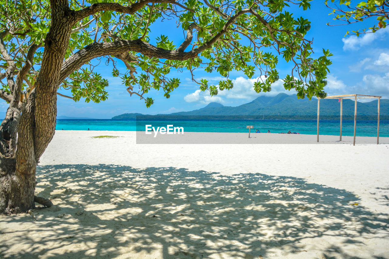water, tree, beach, sea, sky, land, plant, sand, beauty in nature, nature, scenics - nature, tranquil scene, tranquility, day, sunlight, shadow, no people, cloud - sky, idyllic, outdoors