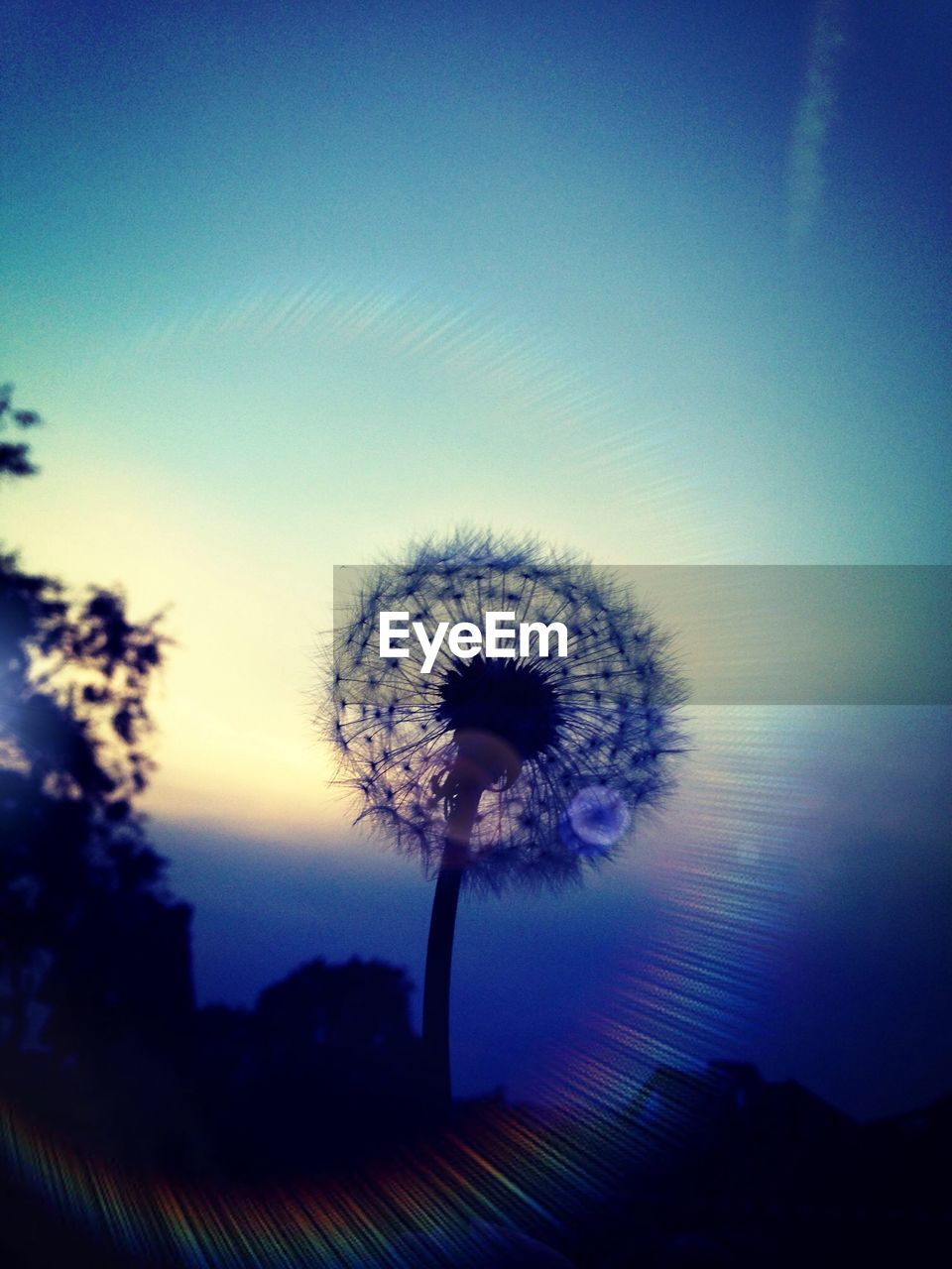 sky, nature, plant, no people, beauty in nature, tranquility, tree, growth, blue, silhouette, freshness, close-up, sunset, cloud - sky, dandelion, outdoors, flower, flowering plant, dusk, tranquil scene, flower head