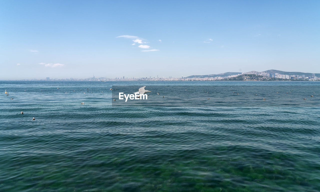 water, sea, sky, scenics - nature, beauty in nature, waterfront, animal wildlife, animals in the wild, animal themes, animal, day, vertebrate, one animal, nature, motion, no people, tranquil scene, outdoors, swimming, marine