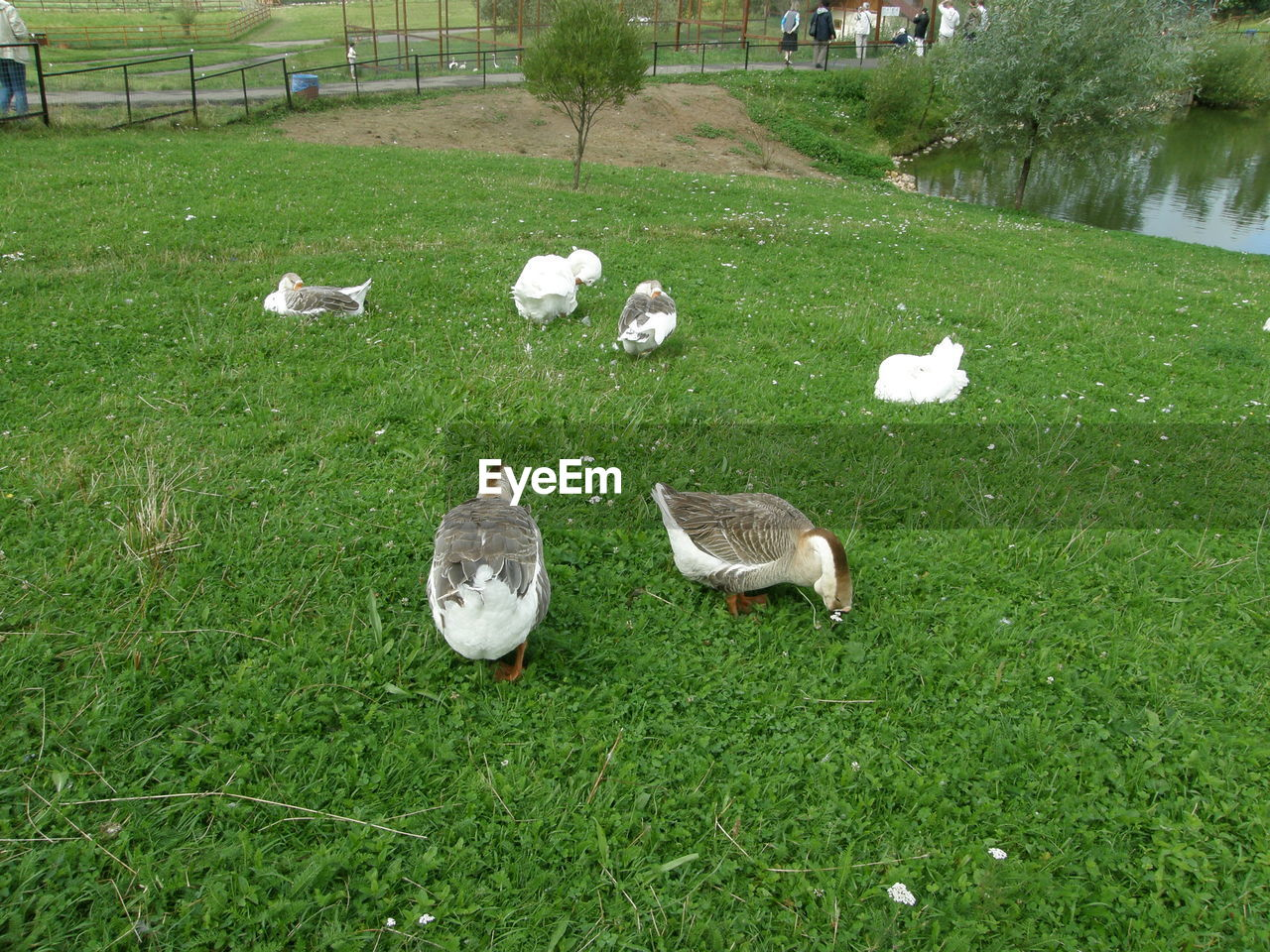 group of animals, animal themes, animal, plant, vertebrate, grass, bird, green color, nature, field, day, animals in the wild, no people, land, animal wildlife, duck, poultry, outdoors, domestic, large group of animals, animal family