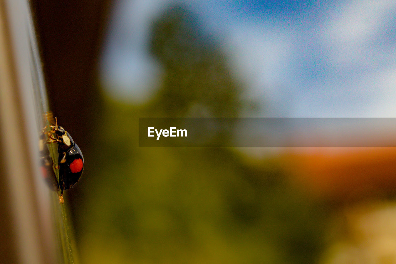insect, invertebrate, animals in the wild, animal wildlife, animal themes, one animal, animal, ladybug, close-up, focus on foreground, beetle, no people, day, selective focus, nature, plant, outdoors, housefly, fly, animal wing