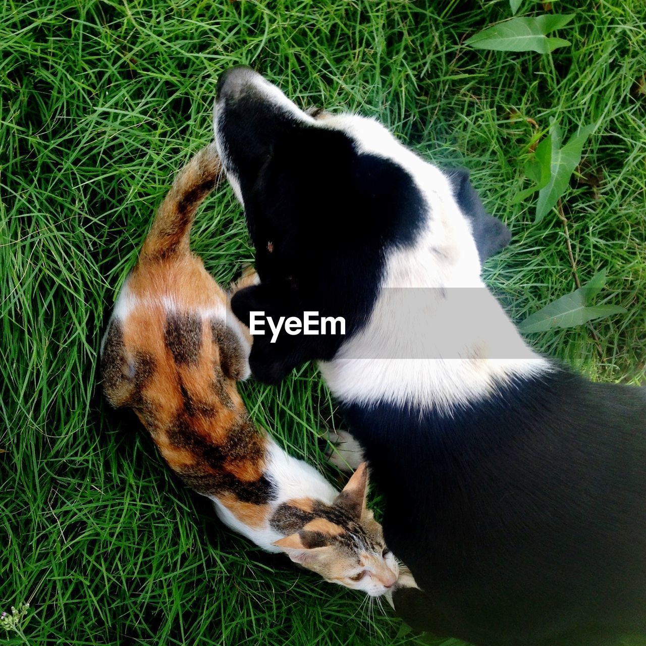 High angle view of dog and cat on grass