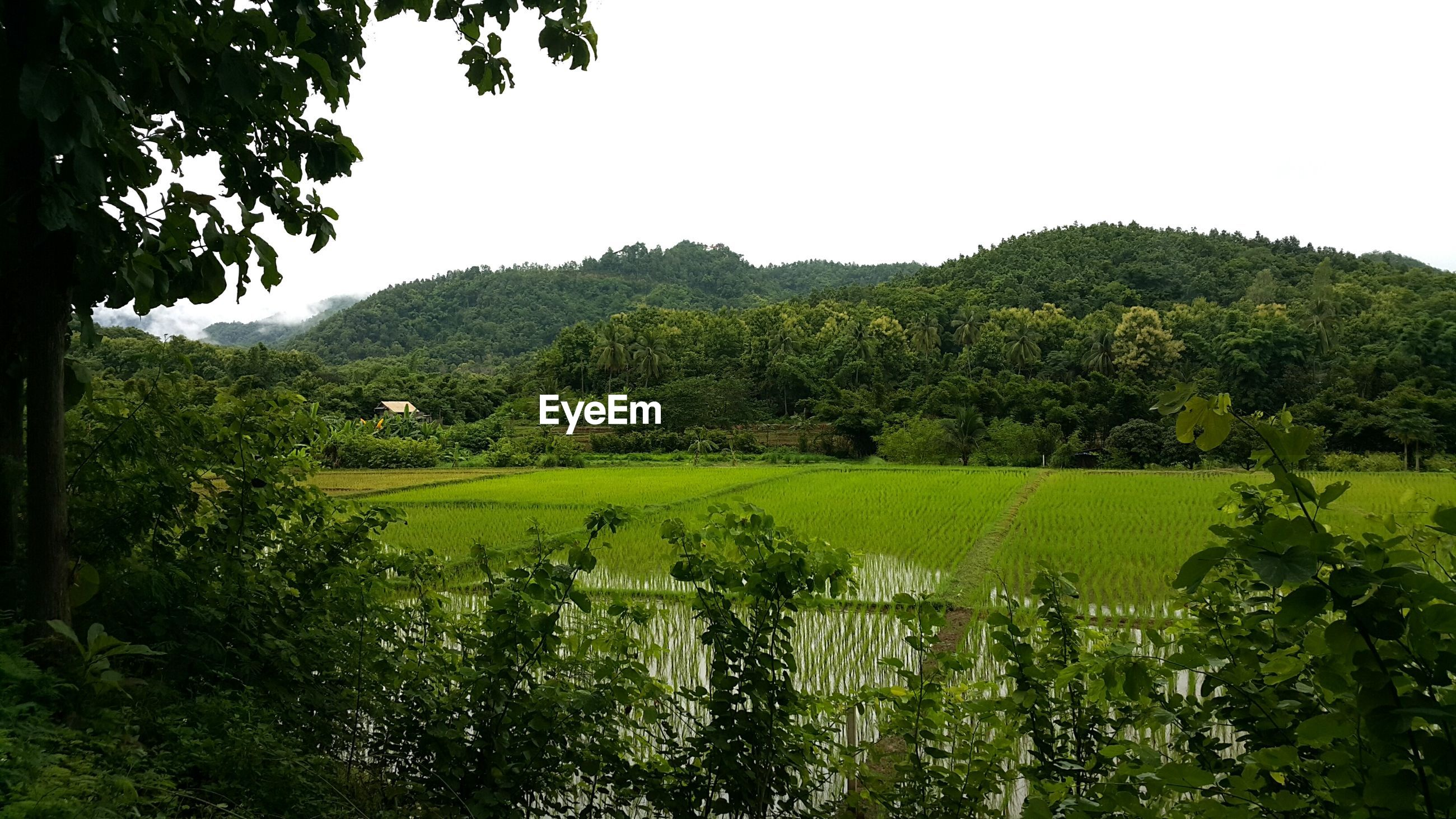 SCENIC VIEW OF GREEN LANDSCAPE AGAINST CLEAR SKY