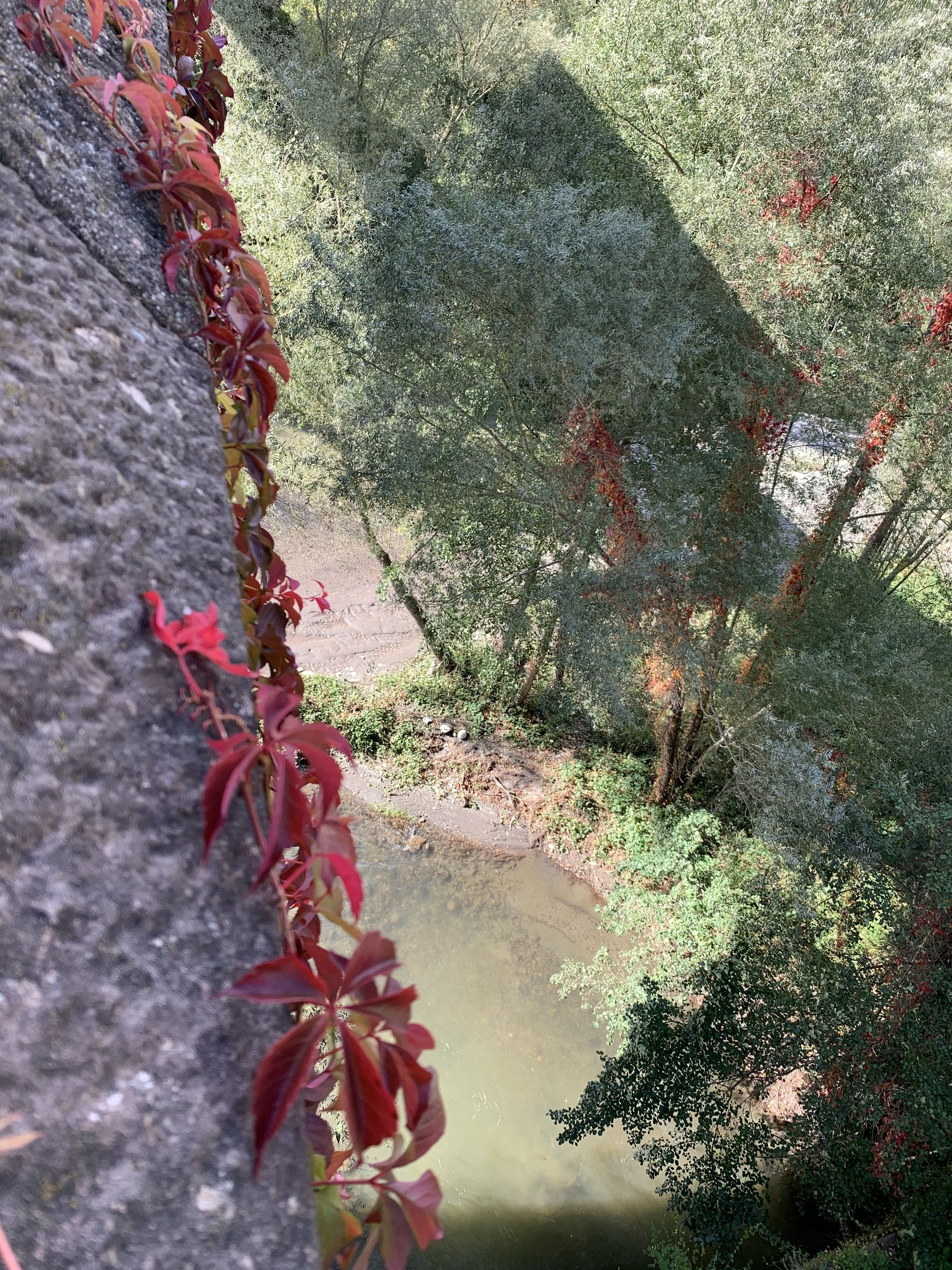 HIGH ANGLE VIEW OF RED FLOWERING PLANTS ON WALL