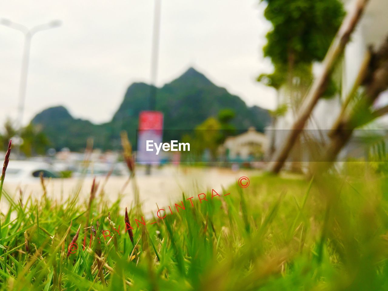 grass, nature, day, water, outdoors, sky, no people, beauty in nature, tree, close-up