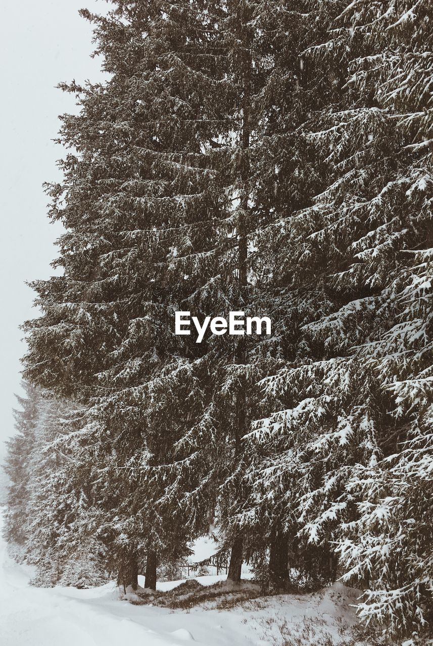 snow, winter, tree, cold temperature, nature, weather, beauty in nature, tranquility, no people, landscape, day, outdoors, scenics, growth, forest