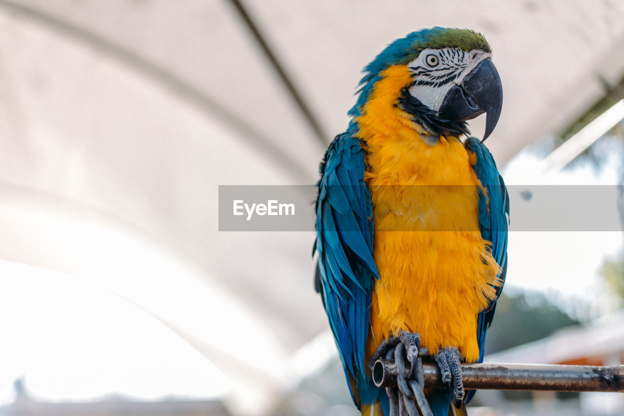 CLOSE-UP OF A BIRD PERCHING ON A PARROT