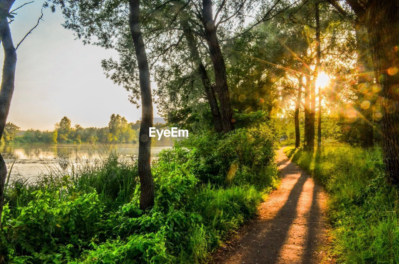 tree, nature, sunlight, growth, green color, tranquil scene, scenics, sunbeam, no people, tranquility, grass, plant, sun, beauty in nature, outdoors, the way forward, field, landscape, rural scene, day, forest, sky, sunset