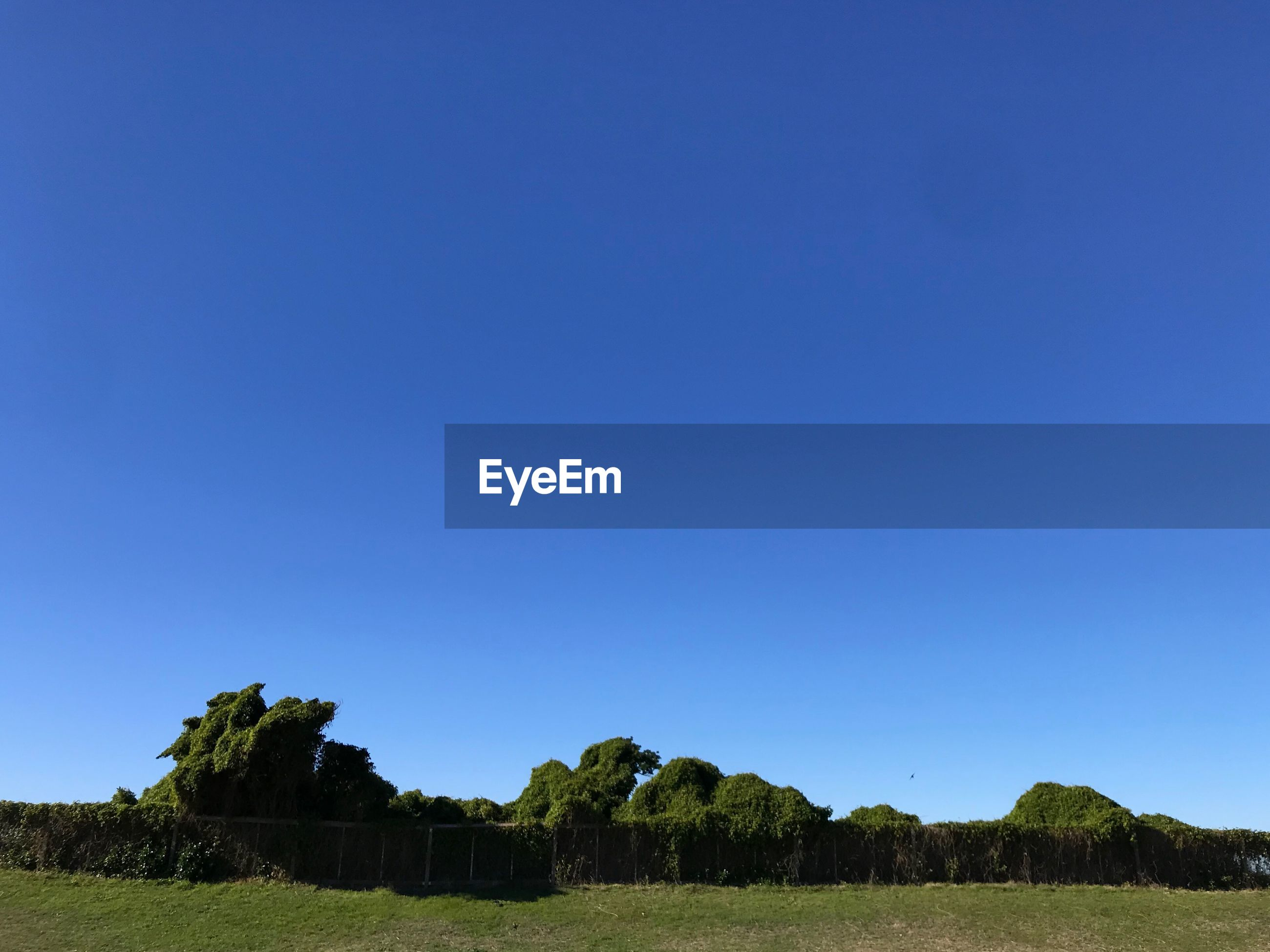 SCENIC VIEW OF TREES AGAINST CLEAR BLUE SKY