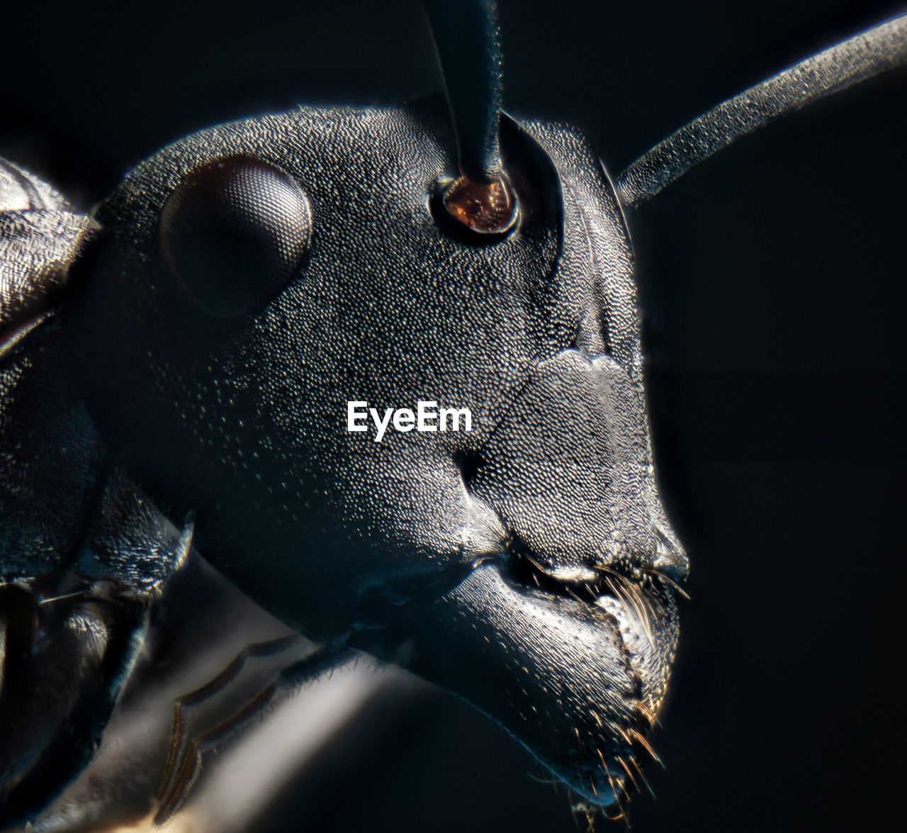 close-up, no people, one animal, animal, animal themes, animal body part, indoors, metal, nature, selective focus, day, mammal, animal wildlife, invertebrate, animal head, sunlight, machine part, insect, pattern