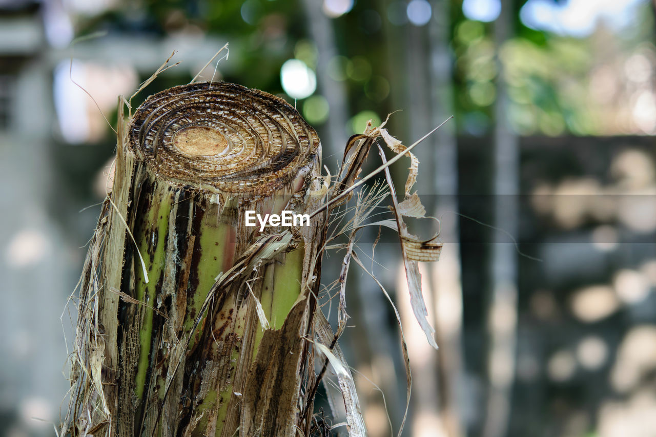 focus on foreground, close-up, plant, snail, day, shell, animal wildlife, animal, mollusk, animal shell, no people, nature, tree, animal themes, gastropod, invertebrate, one animal, animals in the wild, tree trunk, trunk, outdoors, bark, dead plant