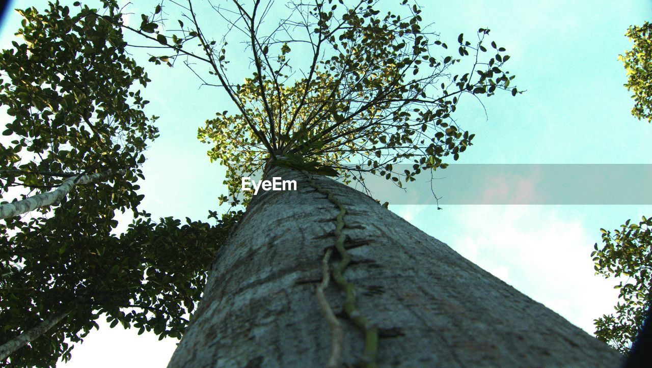tree, low angle view, tree trunk, branch, growth, sky, nature, day, outdoors, no people, beauty in nature, architecture, close-up