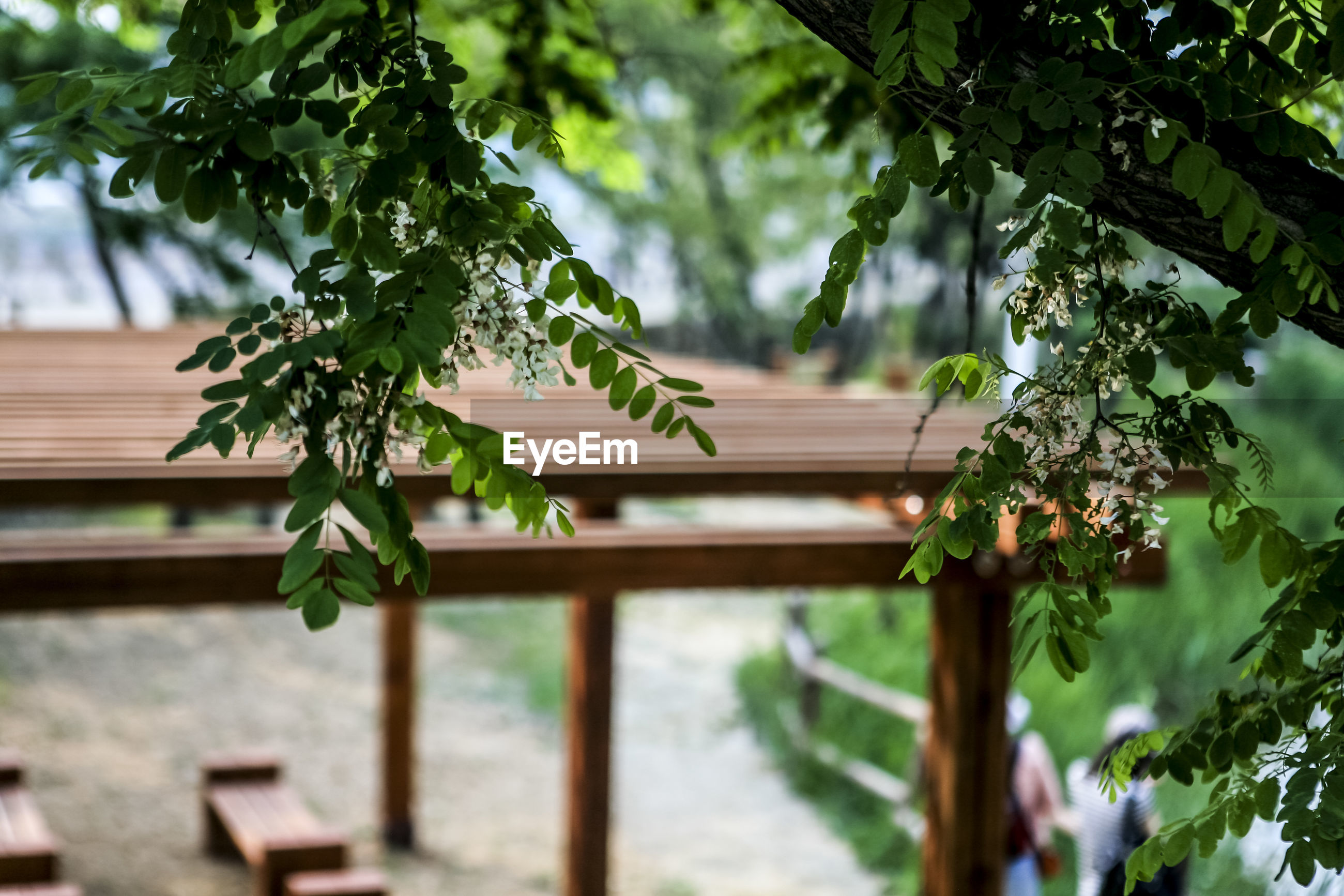 Close-up of tree branch by bench at park