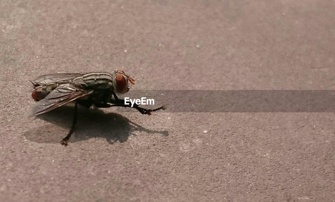 High angle view of housefly on ground