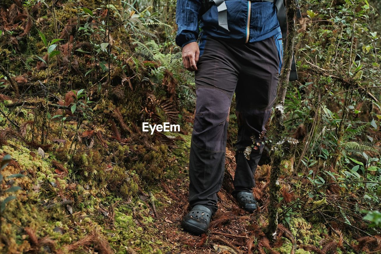 low section, land, one person, plant, real people, human leg, nature, forest, day, lifestyles, men, body part, human body part, leisure activity, tree, standing, field, outdoors, hiking, change, human foot