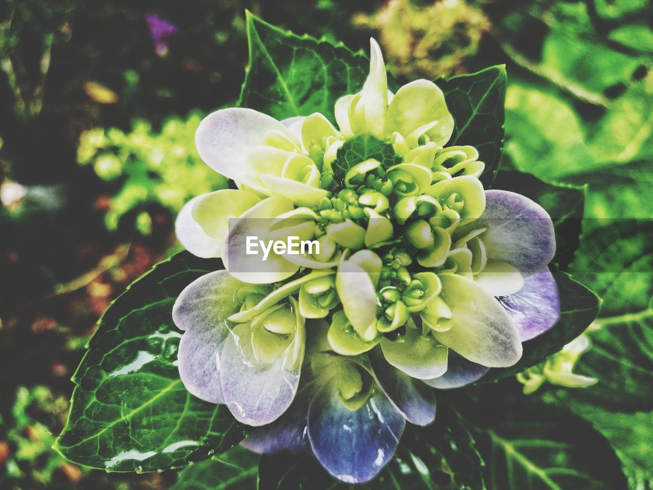 growth, flower, beauty in nature, nature, petal, plant, fragility, flower head, no people, outdoors, day, green color, freshness, close-up, leaf, blooming, passion flower