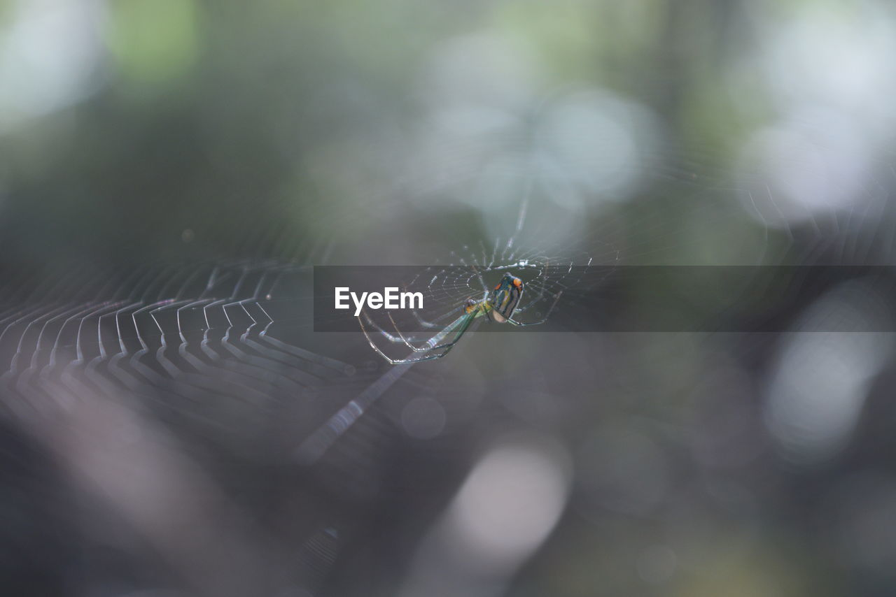 animals in the wild, invertebrate, animal themes, animal, insect, animal wildlife, one animal, selective focus, spider web, close-up, fragility, day, no people, spider, arachnid, focus on foreground, nature, vulnerability, arthropod, outdoors, web