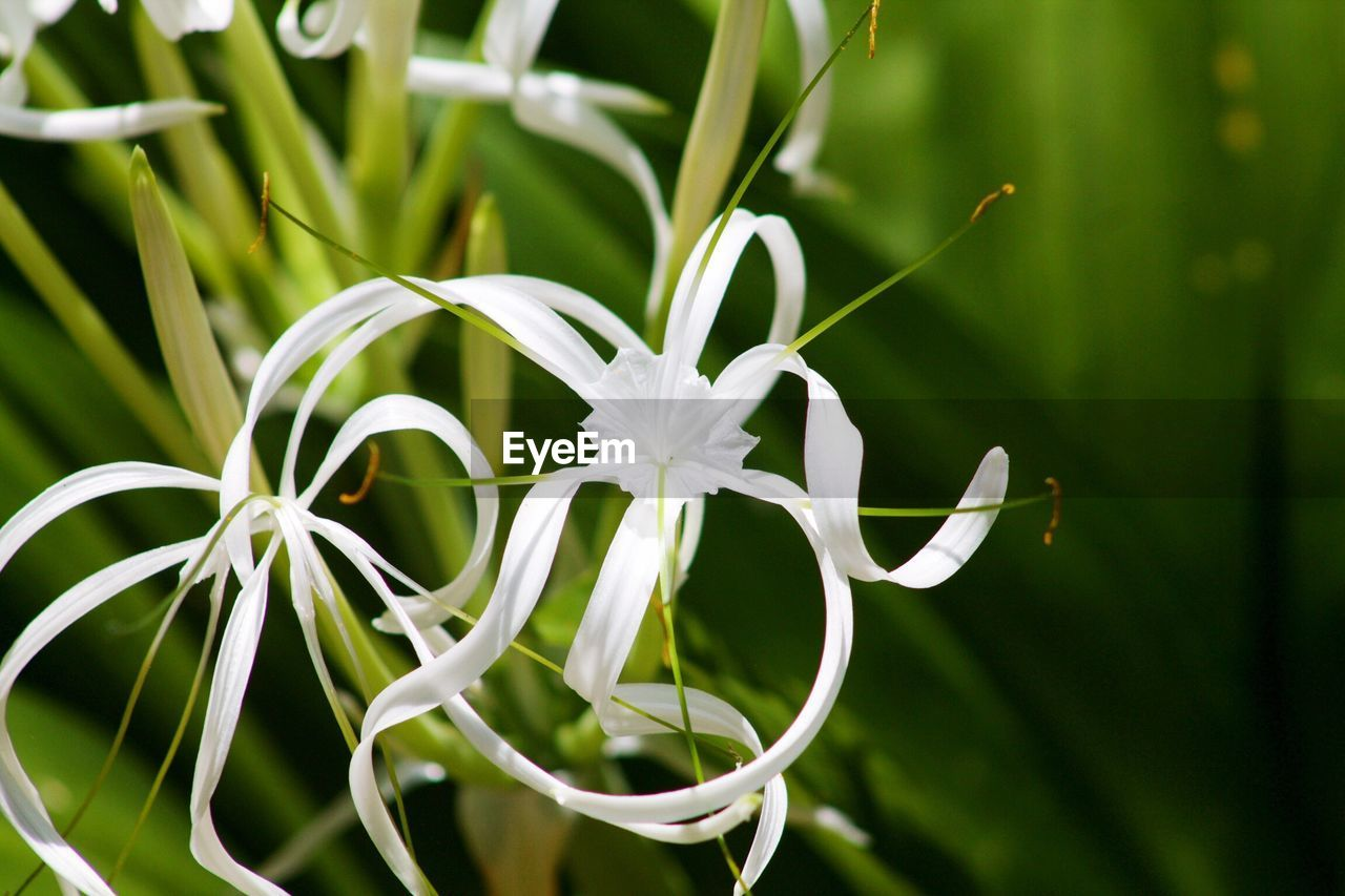 plant, growth, beauty in nature, nature, green color, fragility, white color, flower, no people, close-up, freshness, day, petal, focus on foreground, flower head, outdoors, blooming