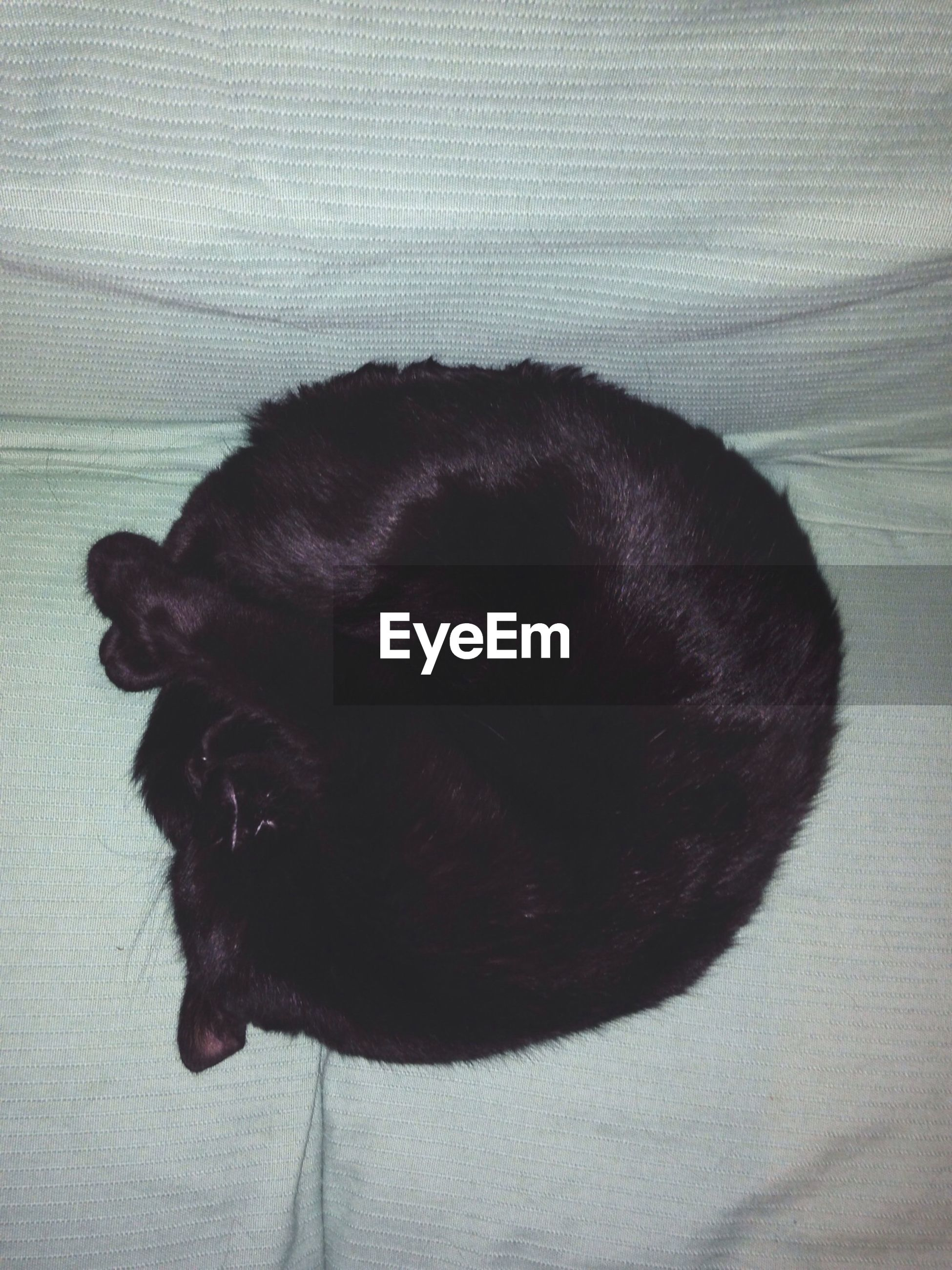 one animal, pets, animal themes, domestic animals, mammal, indoors, relaxation, dog, sleeping, resting, black color, close-up, lying down, domestic cat, animal head, cat, no people, animal body part, high angle view, eyes closed