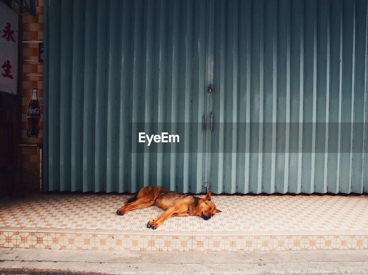 High angle view of dog sleeping outside closed store