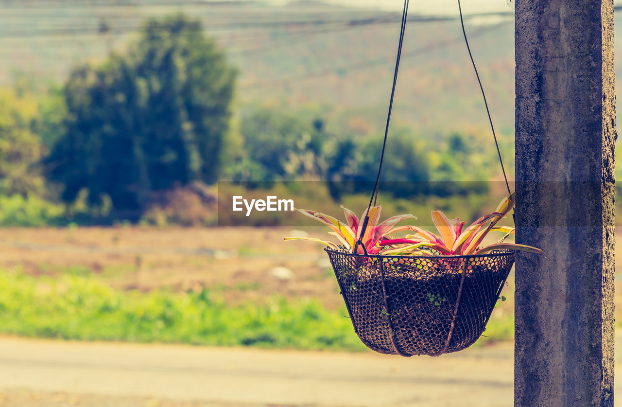 focus on foreground, nature, field, outdoors, close-up, beauty in nature, no people, day, flower, plant, growth, freshness, fragility, tree, food