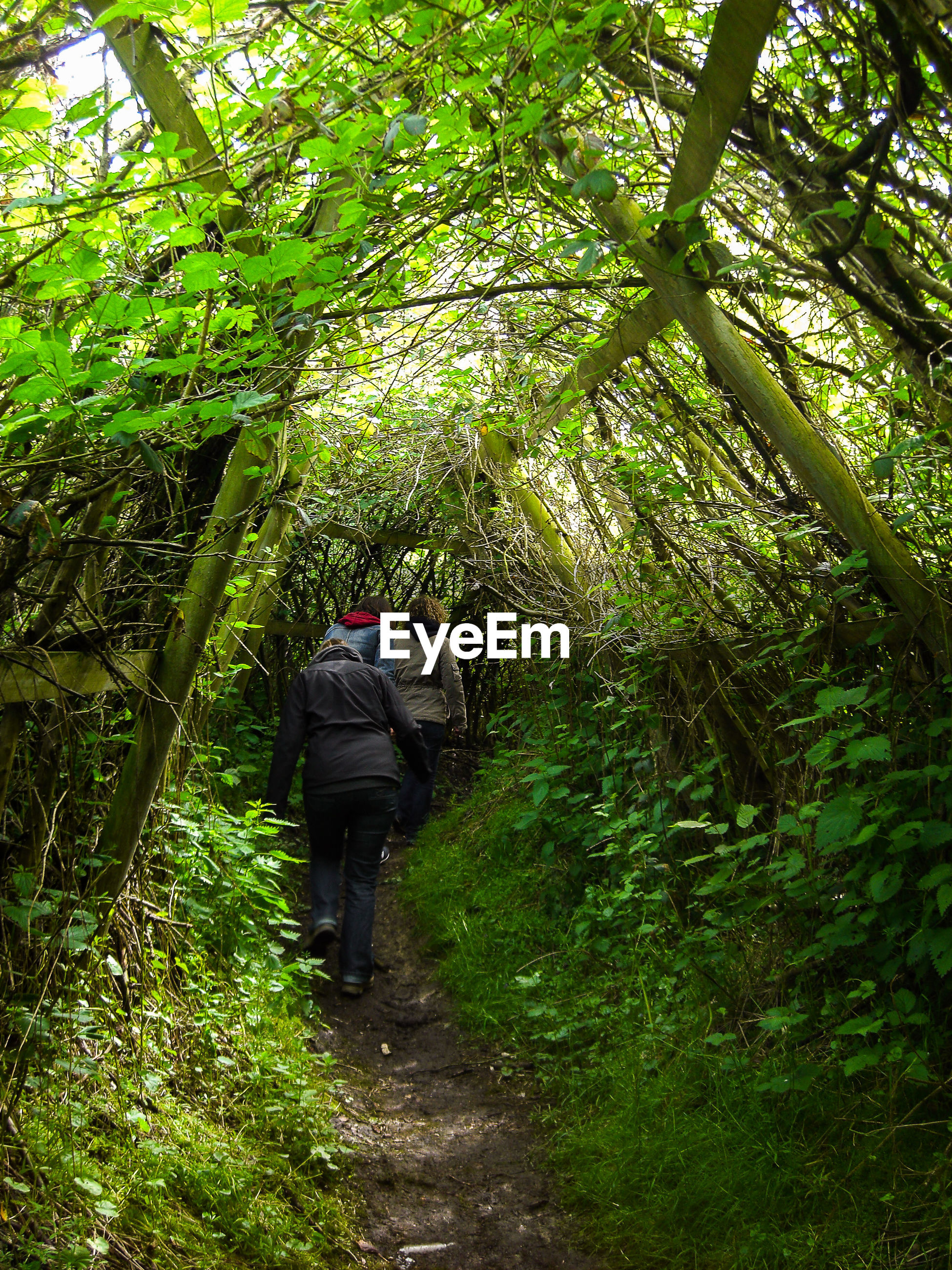Rear view of a people walking in forest