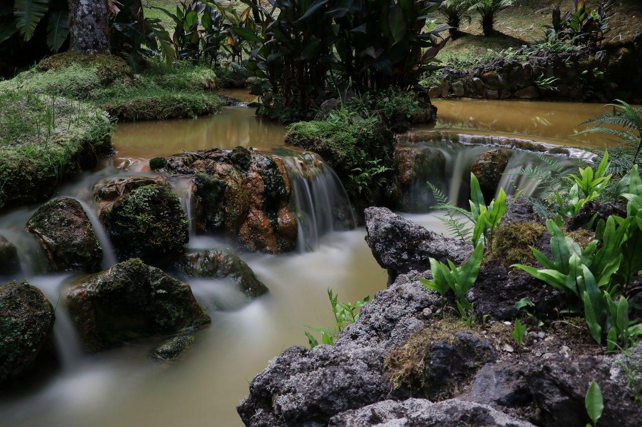 water, rock, long exposure, solid, plant, rock - object, scenics - nature, nature, tree, flowing water, beauty in nature, no people, waterfall, motion, day, flowing, tranquility, outdoors, forest, stream - flowing water, purity, rainforest