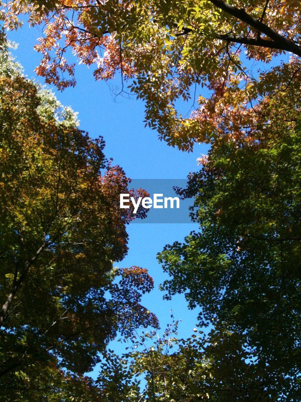 Low Angle View Of Trees Against Clear Blue Sky