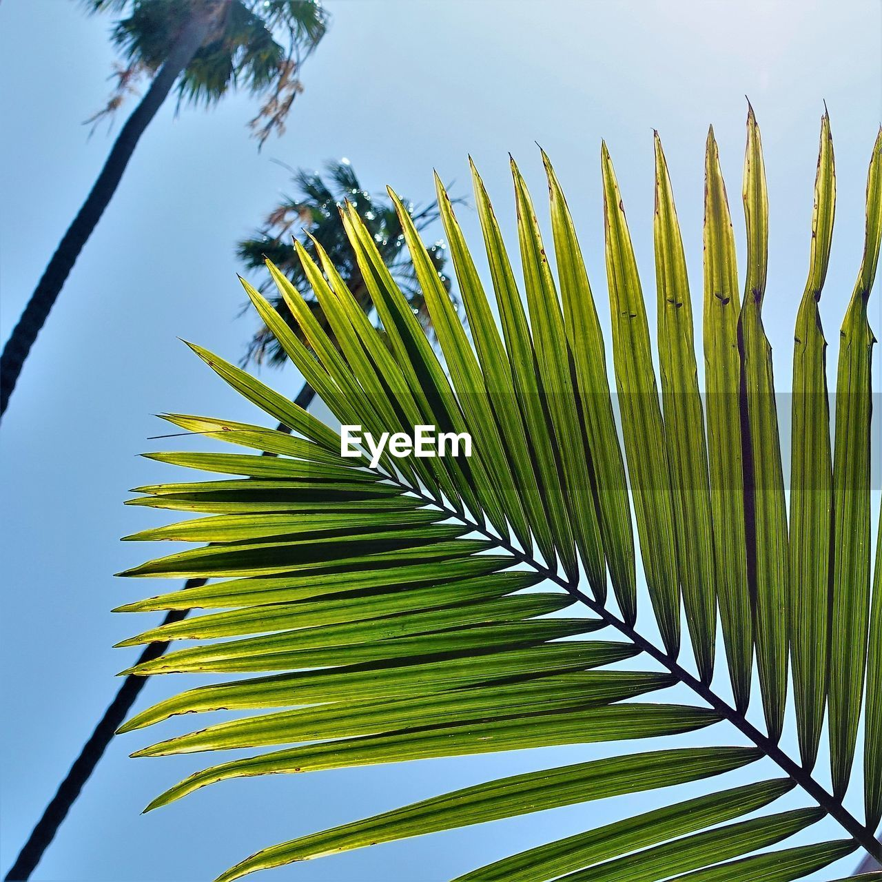 plant, growth, green color, tree, beauty in nature, palm tree, nature, leaf, no people, day, sky, tropical climate, palm leaf, plant part, close-up, low angle view, outdoors, freshness, tranquility, frond, leaves, coconut palm tree