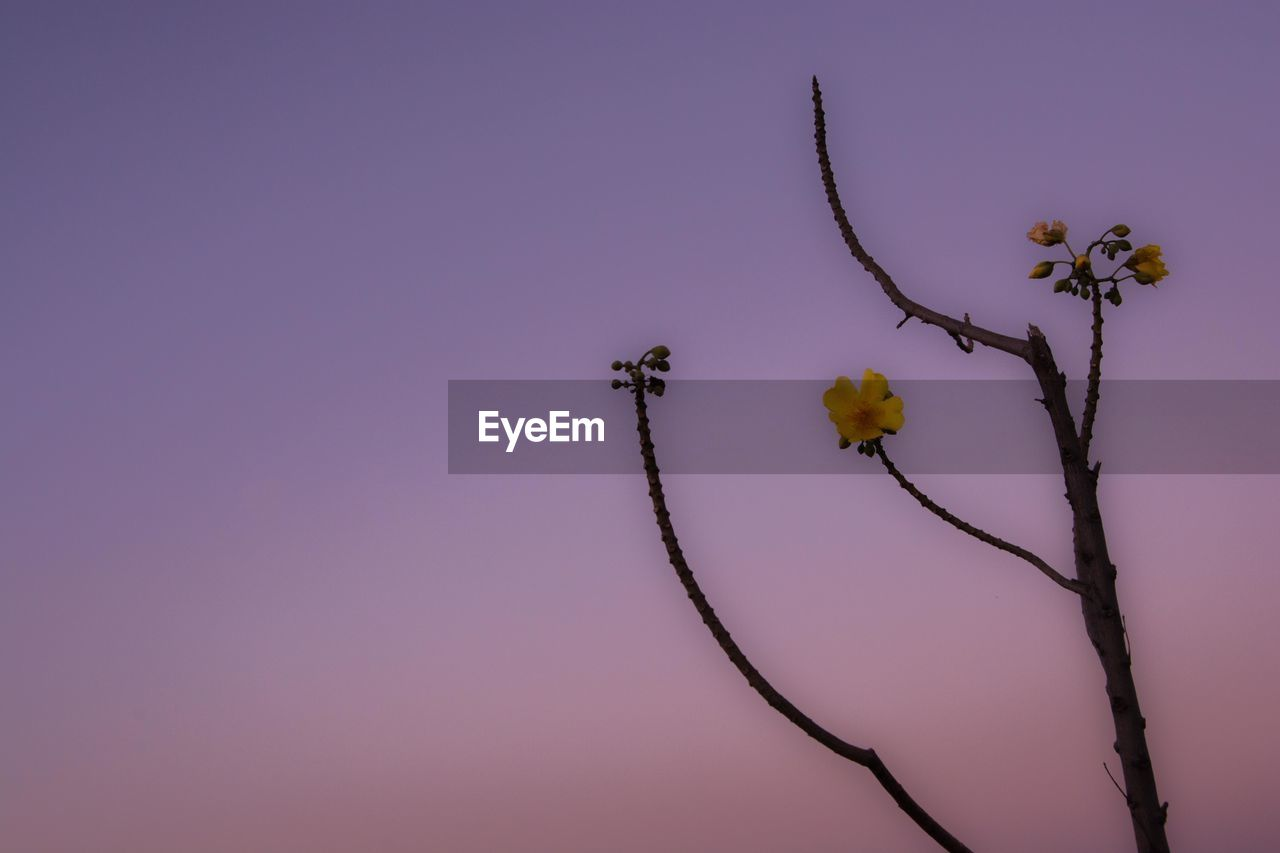 plant, flower, flowering plant, sky, beauty in nature, nature, growth, fragility, vulnerability, low angle view, no people, copy space, close-up, freshness, tree, outdoors, branch, clear sky, tranquility, plant stem, springtime, flower head