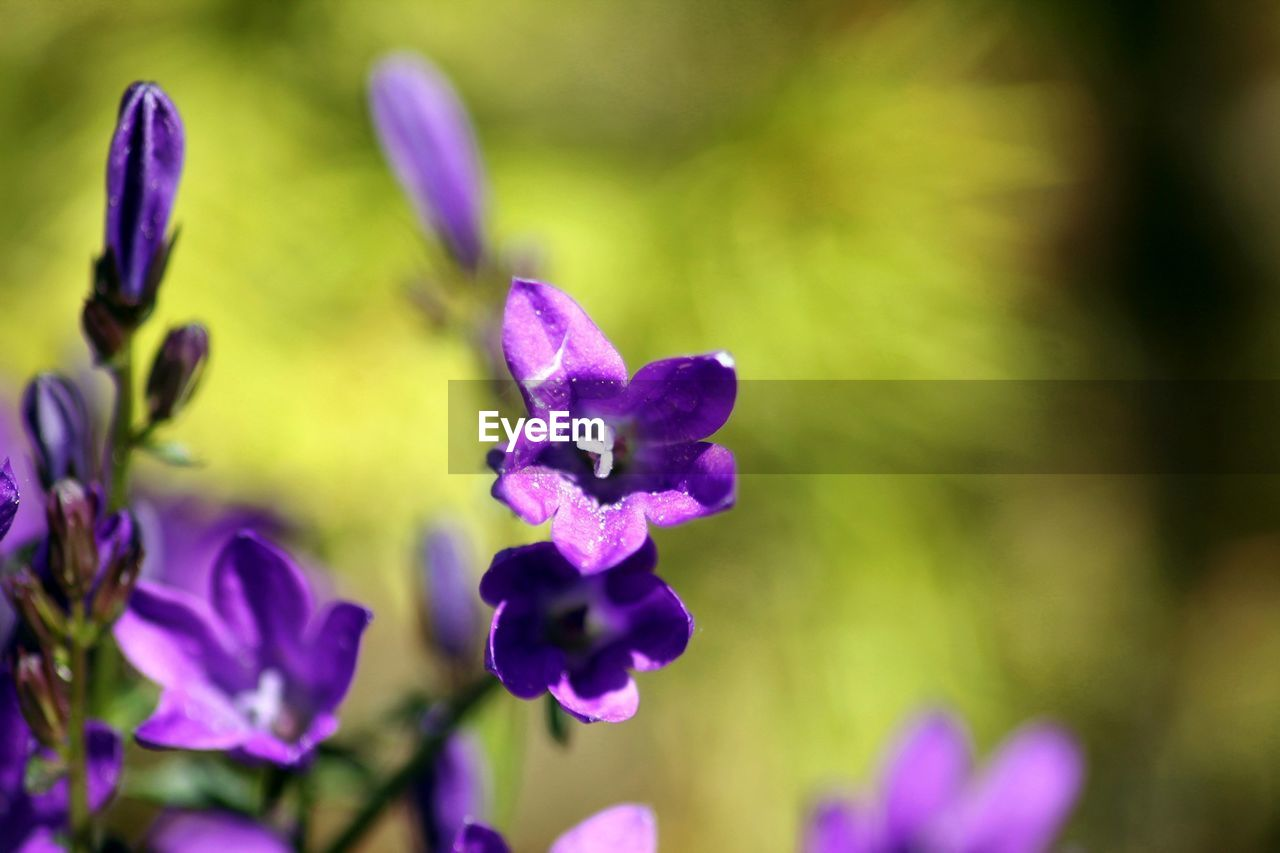 flower, purple, nature, petal, beauty in nature, fragility, growth, focus on foreground, plant, day, outdoors, freshness, no people, close-up, flower head, blooming