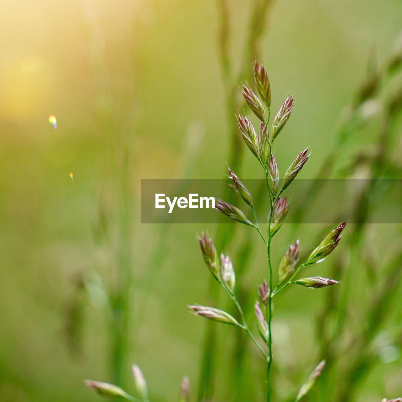 growth, plant, beauty in nature, focus on foreground, close-up, nature, no people, tranquility, green color, selective focus, day, outdoors, vulnerability, freshness, field, fragility, plant part, sunlight, land, plant stem