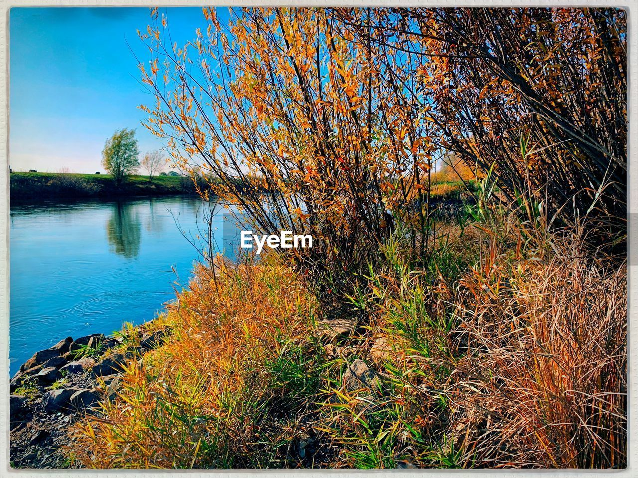 water, lake, plant, tranquility, transfer print, beauty in nature, nature, tree, tranquil scene, reflection, auto post production filter, no people, day, scenics - nature, autumn, growth, land, outdoors, grass, change