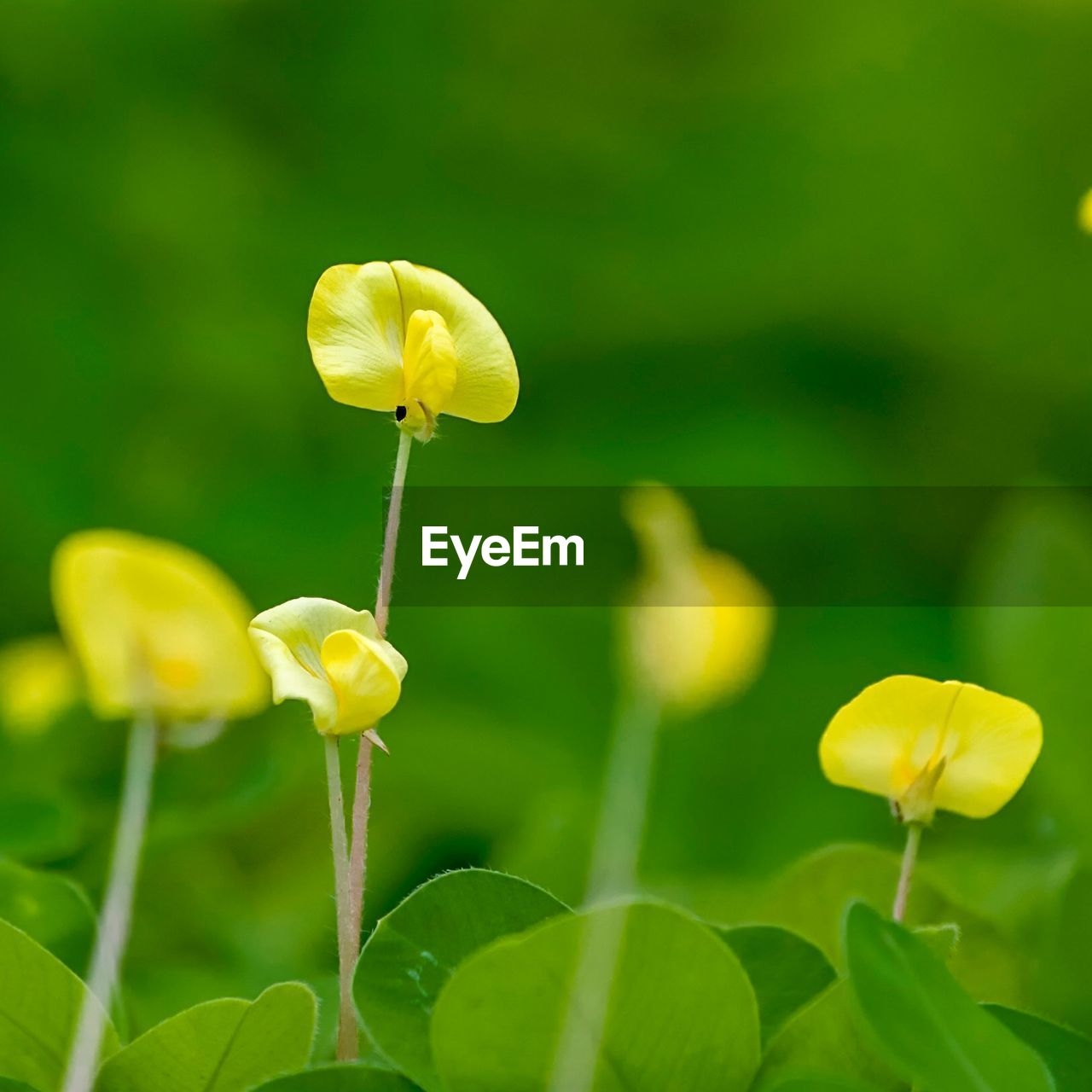 flower, flowering plant, fragility, vulnerability, plant, beauty in nature, yellow, freshness, growth, petal, close-up, inflorescence, flower head, plant stem, nature, no people, focus on foreground, plant part, leaf, day, outdoors, springtime