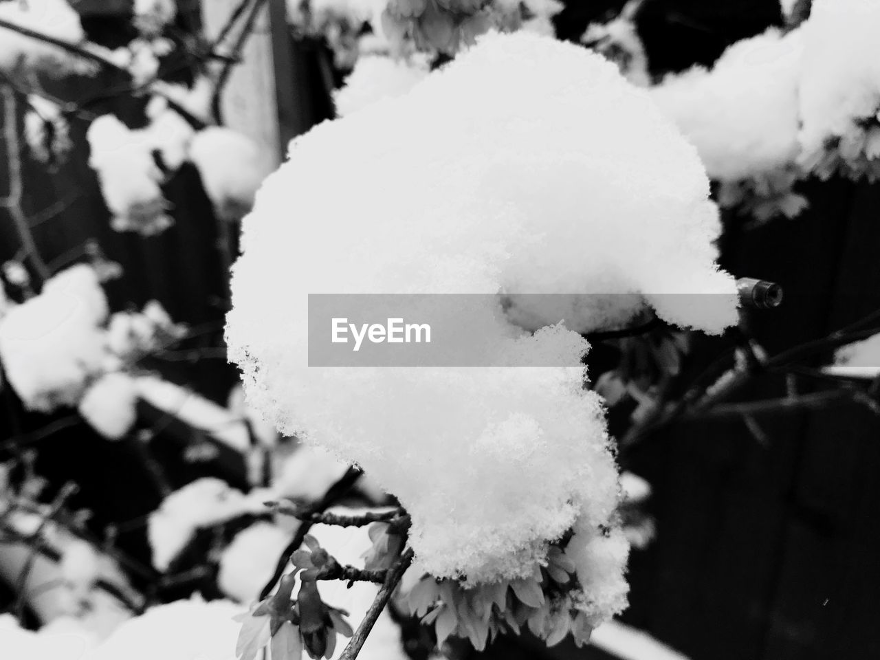white color, snow, cold temperature, winter, nature, close-up, outdoors, beauty in nature, no people, growth, flower, day, fragility, freshness