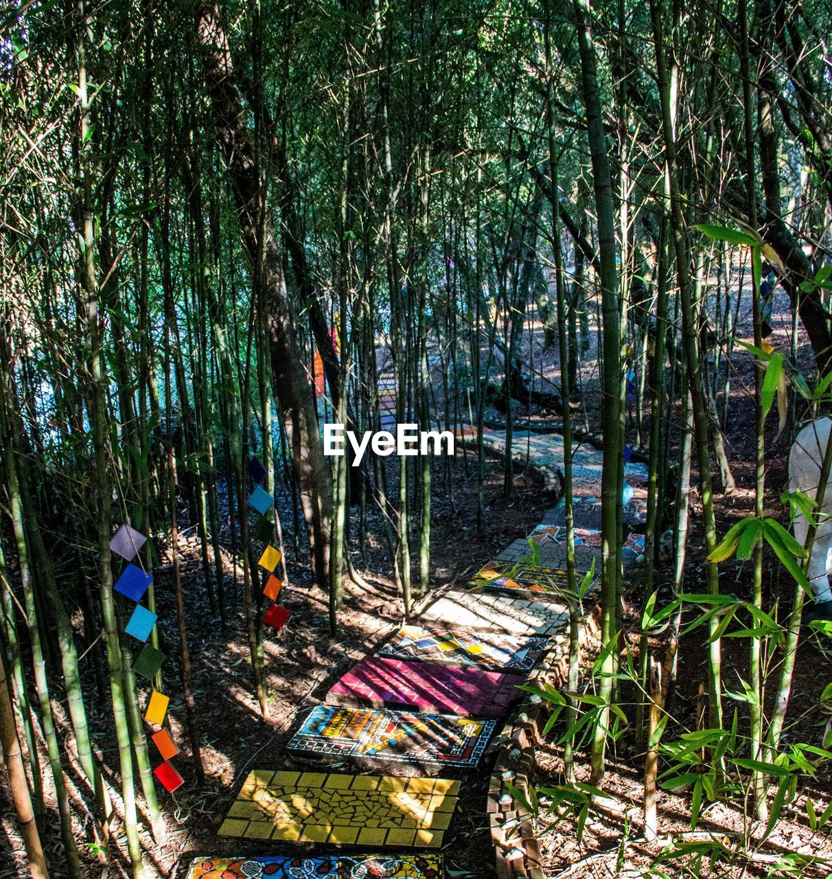 Pathway Amidst Bamboo Plants On Field